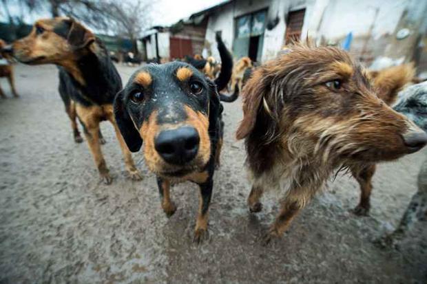 Abrigo para animais na Sérvia: cachorros parecem mais suscetíveis a ajudar os animais com os quais são familiarizados do que os desconhecidos. Foto: Andrej Isakovic/AFP