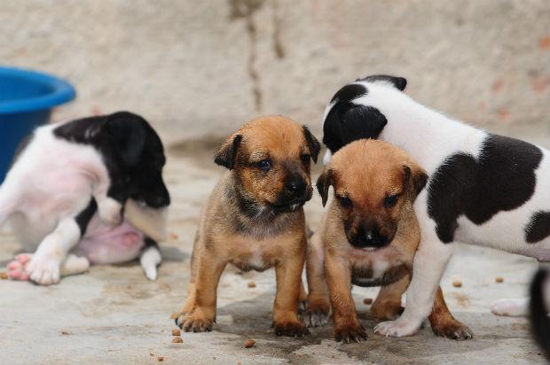 Animais são microchipados e castrados. Foto: Blenda Souto Maior/DP