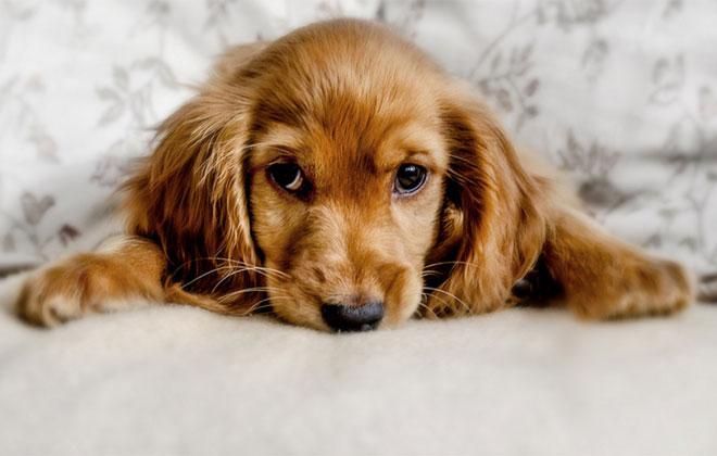 """Na decisão, cachorro foi considerado um """"humano incapaz"""" e não uma """"coisa"""". Foto ilustrativa. Crédito: Buzzybee/Flickr/Divulgação"""