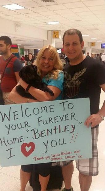 O DART transporta cachorros e gatos resgatados para suas famílias adotivas em todo os Estados Unidos. (Foto: Delta/Divulgação)