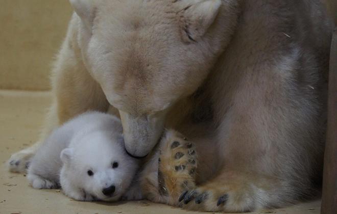 Foto: Zoo am Meer Bremerhaven/Divulgação