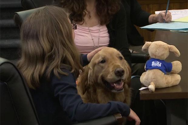 """Já há várias organizações voluntárias que oferecem os serviços dos """"cães-terapeutas"""". Foto: YouTube/Reprodução"""
