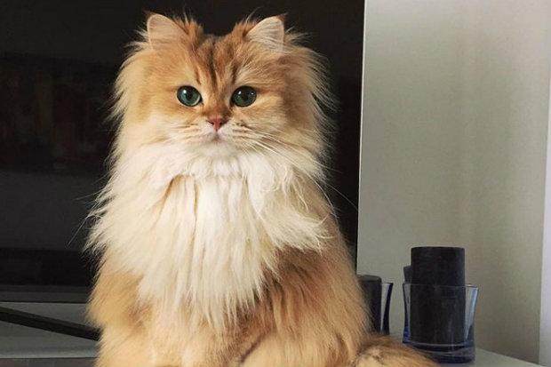 Smoothie é uma verdadeira fofura felina. (Foto: Instagram/Reprodução)