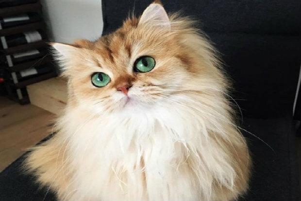 A gatinha vem fazendo sucesso pela internet. (Foto: Instagram/Reprodução)