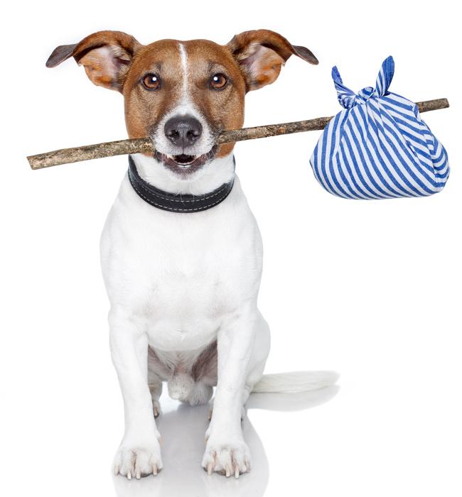 Veterinária reforça que animais com necessidades especiais demandam atendimento personalizado. Foto: Kathy Jalfon/Flickr