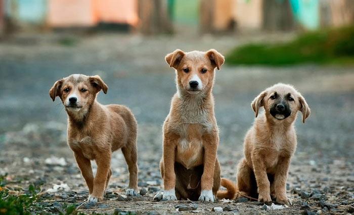 A grande de programação possui transmissão adaptável ao momento do pets. Foto: Reprodução/Internet (A grande de programação possui transmissão adaptável ao momento do pets. Foto: Reprodução/Internet)