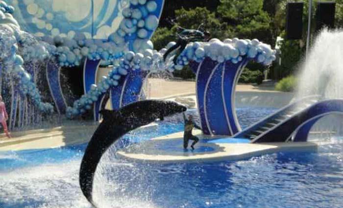 Em março, o parque anunciou o cancelamento de seu programa de espetáculos com orcas. Foto: Domínio Público