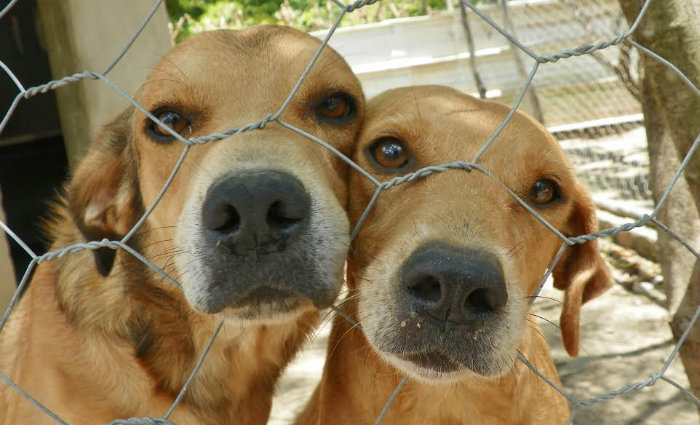 Cachorros e gatos poderão ser adotados em feira no Litoral Sul. Foto: Danilo Luiz/Prefeitura do Ipojuca