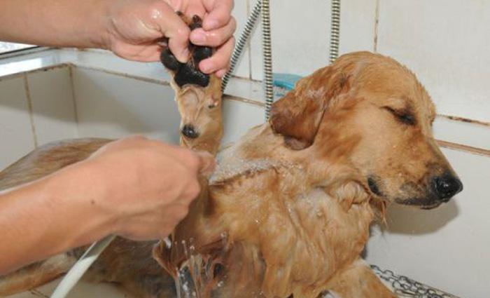 As câmeras deverão ser instaladas no local específico para tratamento, higiene e estética dos animais. Foto: Zuleika de Souza/Arquivo/CB/D.A Press