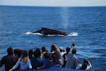 Turistas observam baleias jubarte em seu habitat natural. Foto: Thais Melo/Divulgação