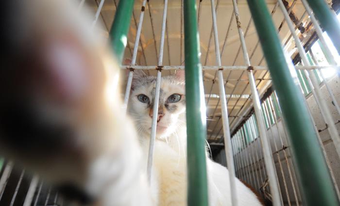 Os cães e gatos para adoção estão microchipados e castrados. Foto: Guilherme Veríssimo/Arquivo DP