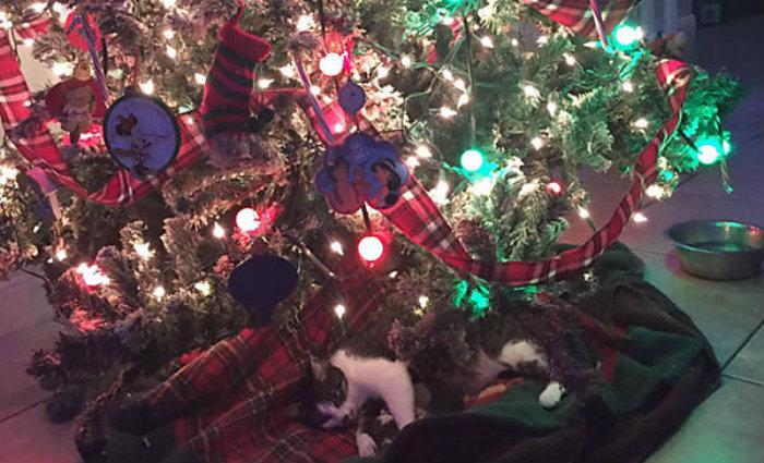 Mamãe felina e seus filhotinhos debaixo da árvore de natal. Foto: Twitter/Reprodução (Mamãe felina e seus filhotinhos debaixo da árvore de natal. Foto: Twitter/Reprodução)