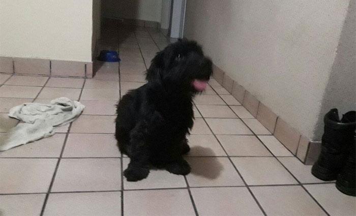 A cadela, um animal adulto de cor preta, está em uma casa no bairro da Tamarineira, na Zona Norte do Recife. Foto: Cortesia
