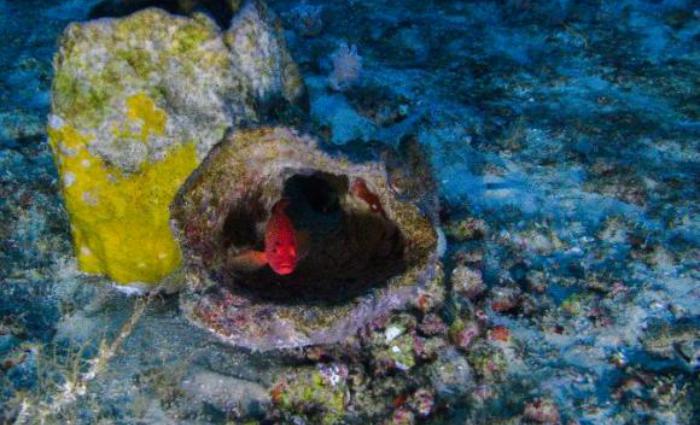 O recife de corais, esponjas e rodolitos tem 9,5 mil quilômetros quadrados. Foto: Greenpeace/Divulgação (O recife de corais, esponjas e rodolitos tem 9,5 mil quilômetros quadrados. Foto: Greenpeace/Divulgação)
