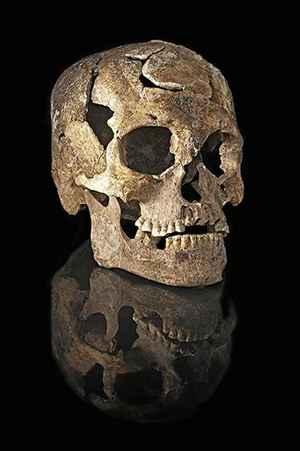 Para estudar os fósseis, os pesquisadores fizeram modelos tridimensionais dos crânios. Foto: Mauricio de Paiva/Divulgação