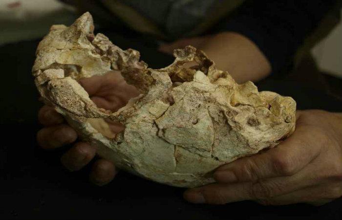Escondido em uma gruta, o fóssil pode ajudar a desvendar como se deu a evolução dos nossos antepassados. Foto: Universidade de Lisboa/Divulgação