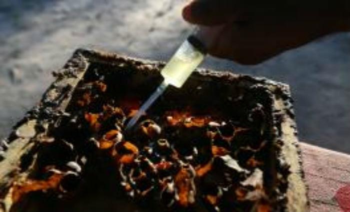 A estimativa é que 50 pessoas morrem por ano no Brasil em decorrência de múltiplas picadas de abelhas. Foto: Arquivo/José Cruz /Agência Brasil (Foto: Arquivo/José Cruz /Agência Brasil)