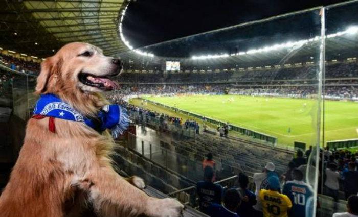 O espaço  é o primeiro em estádios de futebol do Brasil e foi aprovado pelos cãezinhos e seus humanos de estimação que compareceram. Foto: Reprodução/Agência 17 (O espaço  é o primeiro em estádios de futebol do Brasil e foi aprovado pelos cãezinhos e seus humanos de estimação que compareceram. Foto: Reprodução/Agência 17)