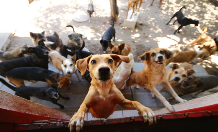 Cerca de 50 cães e gatos estarão à espera de um novo lar, na primeira edição do Festival Animal Foto: Karina Morais/Esp.Dp