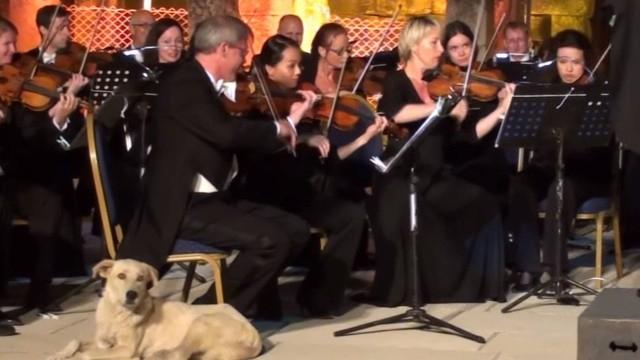 Cão invadiu a apresentação da orquestra austríaca. Foto: Twitter/Reprodução