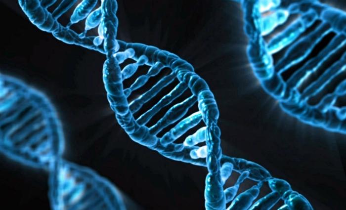 Cientistas conseguem corrigir uma mutação causadora de uma doença hereditária. Foto: Divulgação (Cientistas conseguem corrigir uma mutação causadora de uma doença hereditária. Foto: Divulgação)