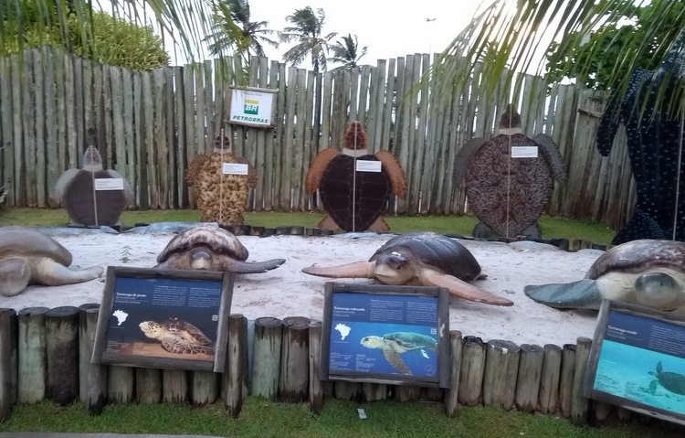Imagine passar a mão na cabeça de um tubarão lixa e ainda registrar a cena. No oceanário do Projeto Tamar isso é possível, com a orientação de um monitor, é claro (Cláudia Eloi / DP)