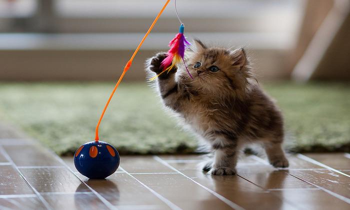 Brinquedinhos simples como esse são garantia de diversão para gatos Crédito: Reprodução