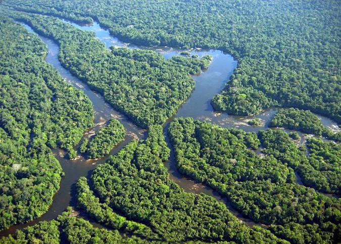 Análise mostra que efeitos desencadeados nas plantas pela alta concentração do carbono impactam no ciclo da água. Foto: Acervo Ibama