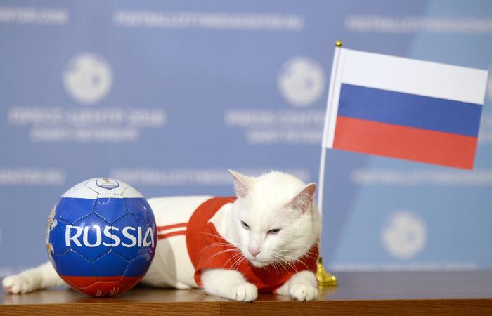 """Achilles, gato branco e surdo, foi considerado o """"oráculo dos animais"""" oficial da Copa do Mundo da Fifa 2018. Foto: OLGA MALTSEVA / AFP"""