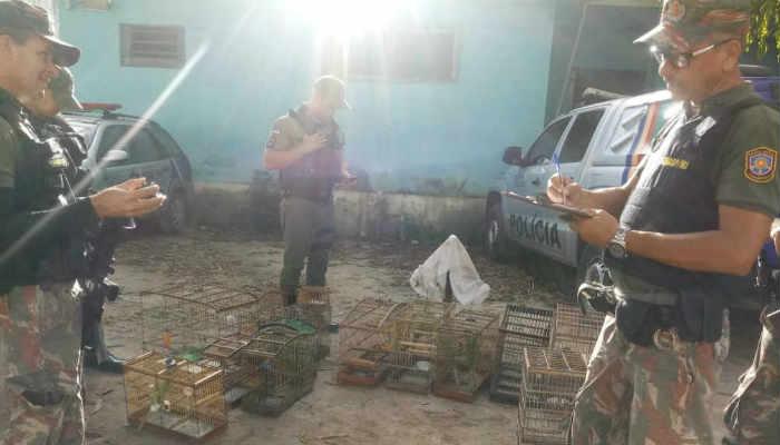 Aves foram entregues ao CETA/CPRH e serão soltas na natureza (PMPE)