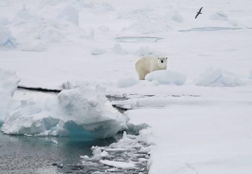 O arquipélago de Svalbard é o lar de mil ursos polares, segundo dados de 2015. A espécie é protegida desde 1973. Foto: AP Photo/Romas Dabrukas