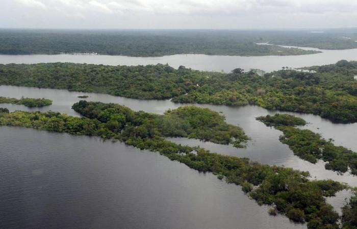 A diminuição do desmatamento, no ano passado, permitiu reduzir as emissões de dióxido de carbono em 610 milhões de toneladas na Amazônia. Foto: Valter Campanato/Agência Brasil