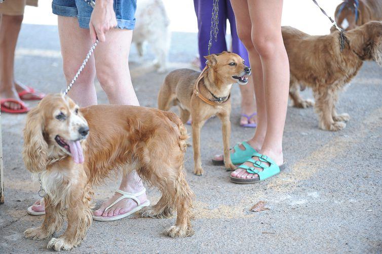 Brasileiros criam mais cães do que gatos. Foto: Fábio Pozzebom/Arquivo Agência Brasil