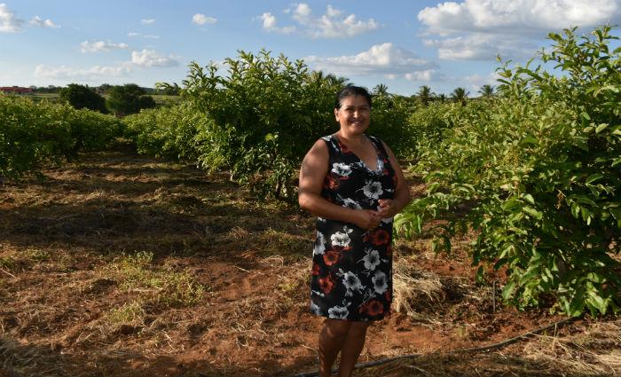 Edvaneide Graça começou plantando cinco mudas, hoje possui 800 pés e consegue vender toda a produção. Foto: