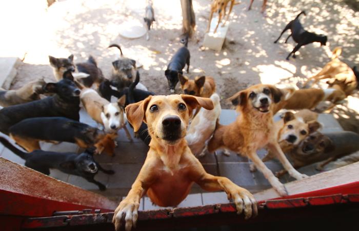 São pets de todas as idades e tamanhos, saudáveis, microchipados e castrados Foto: Karina Morais/Esp.DP