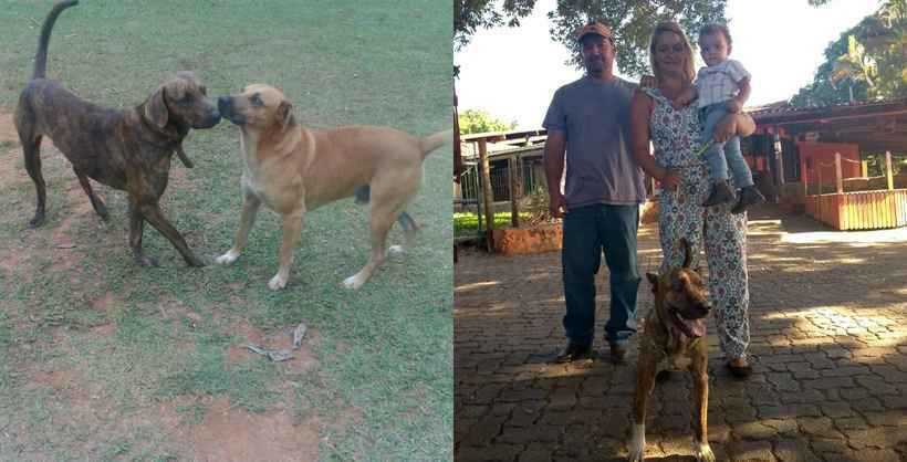 Vitinho e Zeus: cachorros foram resgatados e devolvidos a seus tutores. Foto: Arquivo pessoal