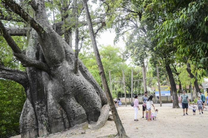Incidente aconteceu nas imediações do Jardim do Baobá. Foto: Inaldo Menezes/PCR/Divulgação.
