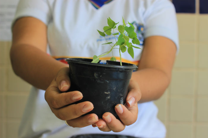 O objetivo é promover educação ambiental nas instituições de ensino durante o ano letivo. Foto: Marlon Diego/Esp.DP.