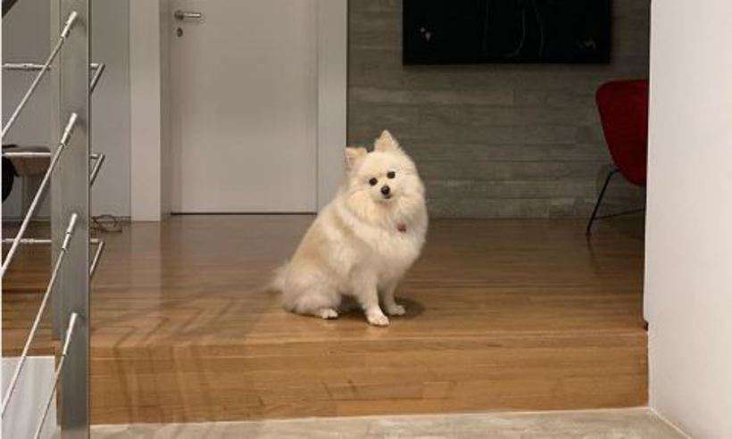 Nina, de três anos, foi adotada depois de ser retirada de um canil que maltratava cães. Foto: Reprodução/Instagram