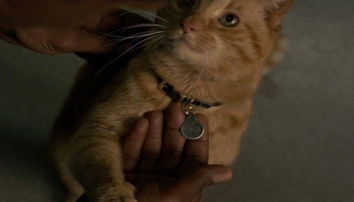 O gato Reggie, que 'interpreta' Goose em 'Capitã Marvel'. Foto: Divulgação/Marvel