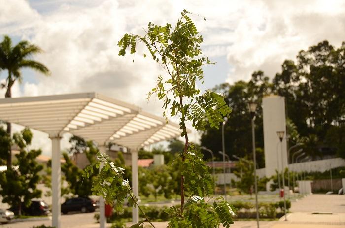 Atualmente, existem 260 mil árvores espalhadas pela capital pernambucana. Foto: Antonio Tenório/Divulgação.