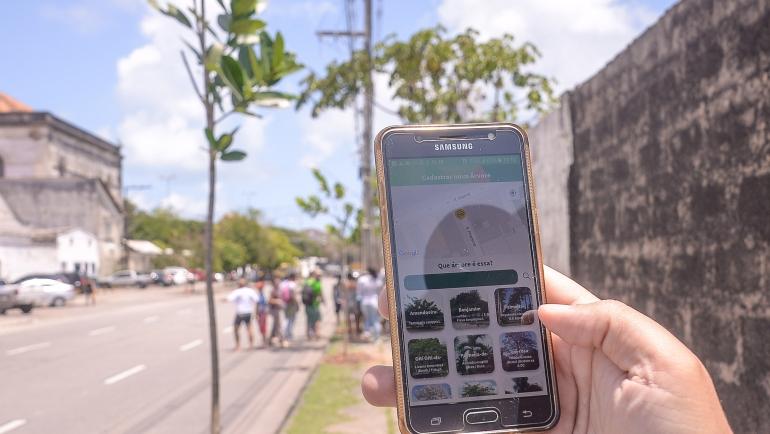 O aplicativo Arborize já dispõe de 200 árvores cadastradas na plataforma pelos moradores. Crédito: Daniel Tavares/PCR