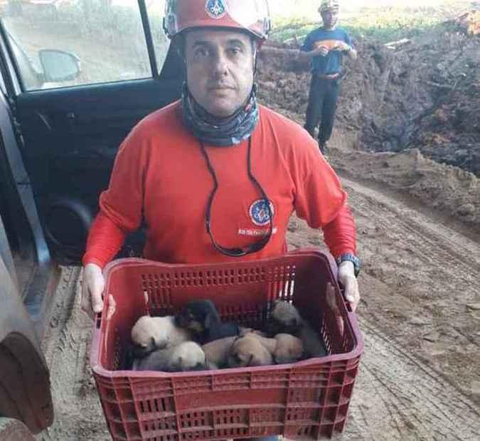 Cachorros foram encontrados durante buscas por vítimas da tragédia de Brumadinho. Foto: Divulgação/ Corpo de Bombeiros