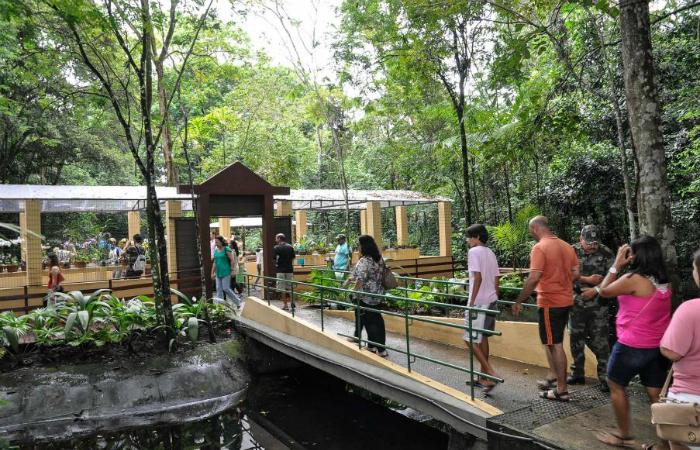 Foto: Divulgação Jardim Botânico