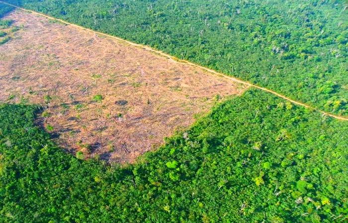 20% dos alertas não validados está no bioma amazônia. Foto: Reprodução/Ibama  (Foto: Reprodução/Ibama )