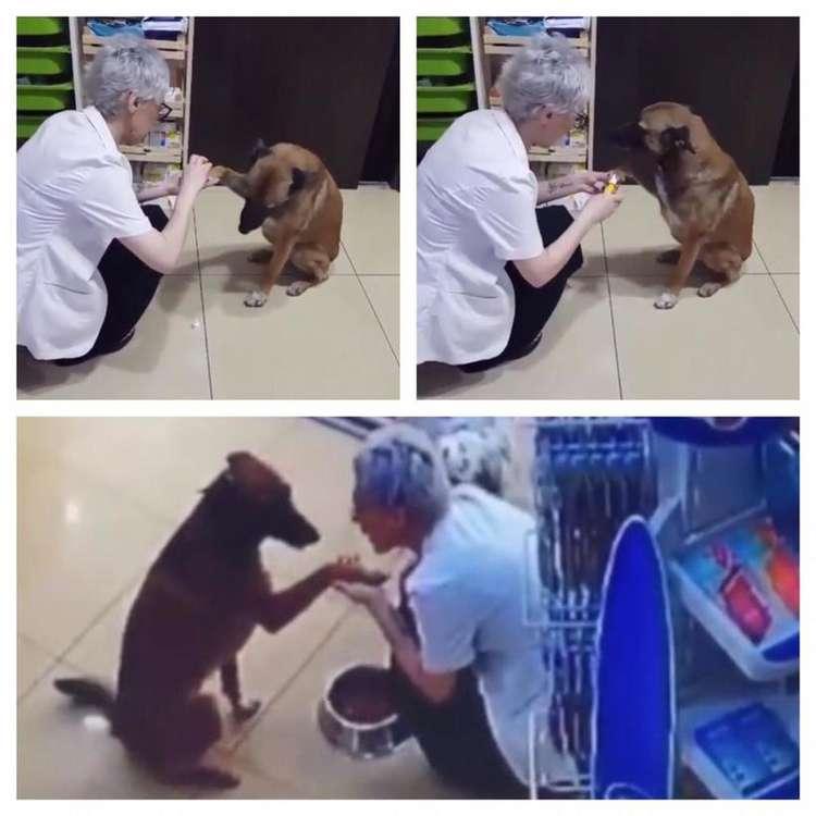 Funcionária percebe as feridas do animal, que acaba recebendo curativo, além de água e comida. Foto: Reprodução/Redes Sociais