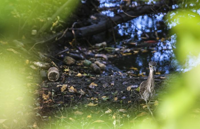 Meio ambiente não tem condições de absorver volume de descartáveis usados. Foto: Tarciso Augusto / Esp. DP Foto.