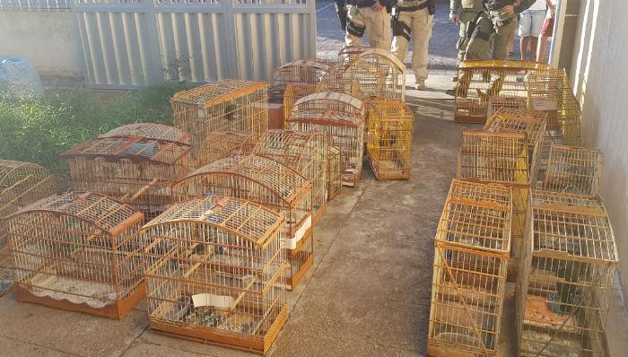 56 pássaros, nove jabutis e um macaco sagui foram apreendidos. Foto: PRF /Divulgação