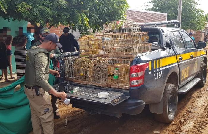 Aves foram levadas para um centro de tratamento na região - Divulgação/PRF