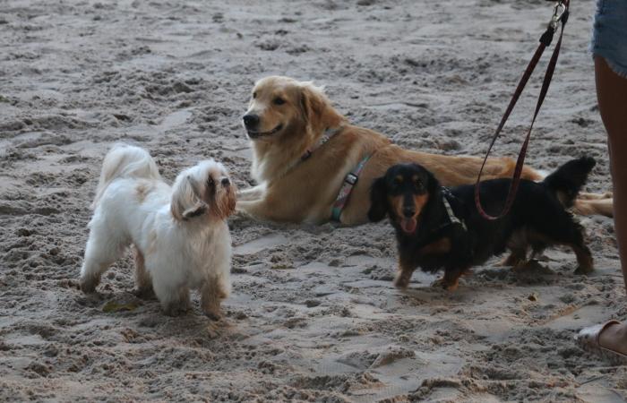 Ao primeiro sinal de que algo não está bem, o dono do pet deve procurar um veterinário - Gabriel Melo/Esp. DP